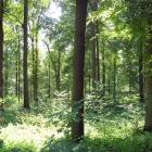 Der Wald um Marienberge